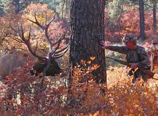 hunting_1.jpg